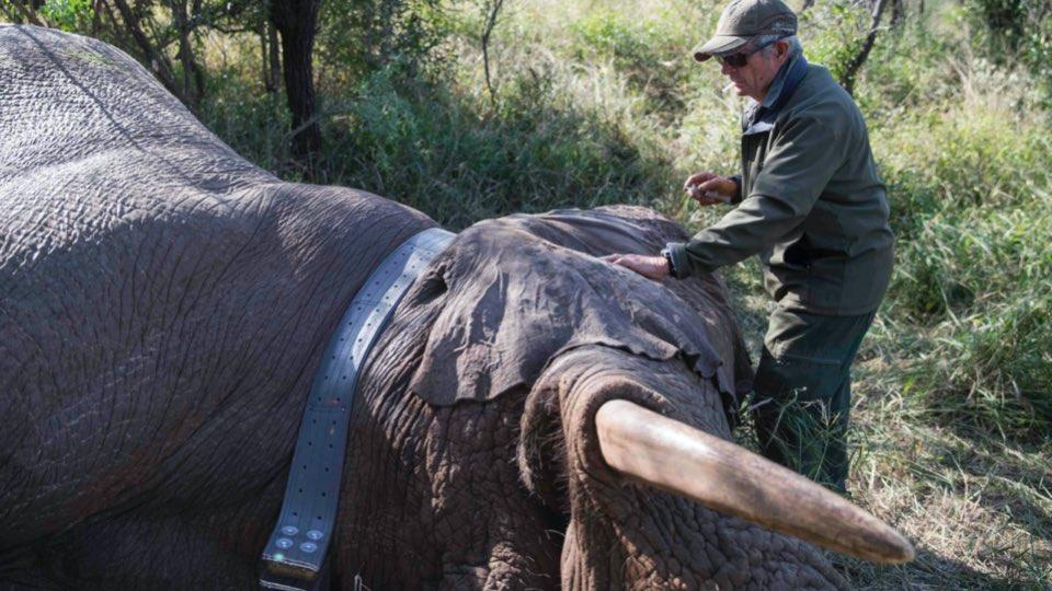 Conservation Trip with Empowers Africa, Wildlands & WildlifeACT